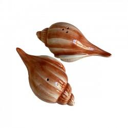 Sel & Poivre Coquillage